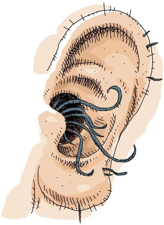 Risultati immagini per peli dalle orecchie